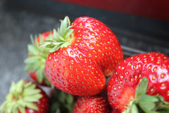 Fresh Strawberry Royalty Free Stock Photos
