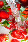 Fresh strawberry Royalty Free Stock Photography
