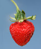 Fresh strawberry. To glasswares on a dark blue background Stock Photography