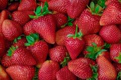 Fresh Strawberry Background. close up.  Royalty Free Stock Images