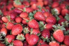 Fresh Strawberry Background. Focus center Royalty Free Stock Photos