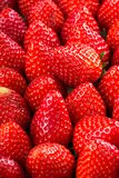 Fresh strawberry background stock photography