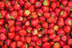 Fresh Strawberry Background Stock Images