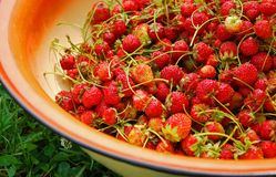 Fresh strawberry in a basin Royalty Free Stock Images