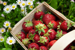 Fresh strawberry in basket Stock Image