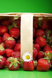 Fresh strawberry in basket Stock Photo