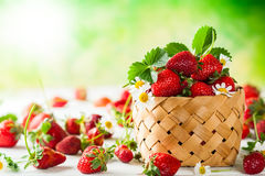 Fresh strawberry Stock Image
