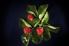 Fresh strawberry on black backgrownd Royalty Free Stock Images