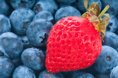 Fresh strawberry with blue berry Stock Photo