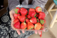 Fresh Strawberry in the box Stock Photography