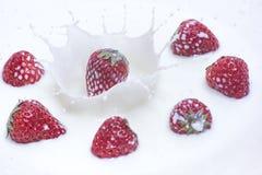 Fresh strawberry falling down into splashing milk. Fresh strawberry falling down to splashing milk Royalty Free Stock Images