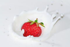 Fresh strawberry falling into the milk with splash Stock Images