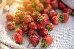 Fresh strawberry from farm. Ripe red strawberries on table. Harvest in garden, juicy strawberries, fruit, dessert, healthy, sweet, background, tasty, summer royalty free stock image