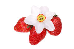 Fresh strawberry and flower isolated Stock Images