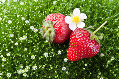 Fresh strawberry and flowers Stock Photos