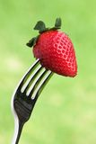 Fresh strawberry on a fork  Stock Images