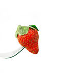 Fresh strawberry  on a fork over white Stock Photo