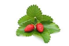 Fresh strawberry fruits Stock Photo