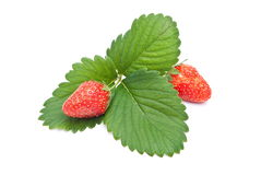 Fresh strawberry fruits Royalty Free Stock Photography