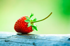 Fresh strawberry. Strawberry fresh from the garden Stock Image