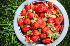 Fresh Strawberry on Green Grass Stock Photo