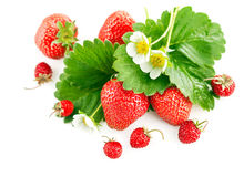 Fresh strawberry with green leaf and flower Stock Photos