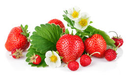 Fresh strawberry with green leaf and flower Stock Images