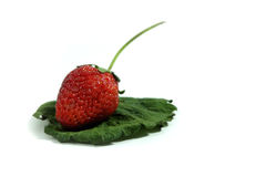 Fresh strawberry on green leave Stock Photos