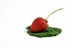 Fresh strawberry on green leave Stock Photography