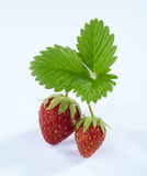 Fresh strawberry with green leaves isolated. On white background Royalty Free Stock Image