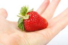 Fresh strawberry in hand. Isolated on white Stock Photos