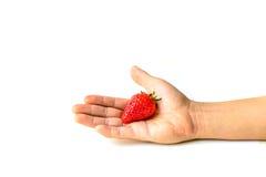 Fresh Strawberry on hand Stock Photography