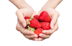 Fresh strawberry in hands Stock Photography