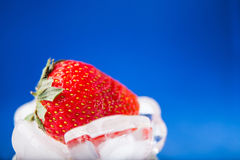 Fresh strawberry in ice on blue background Stock Images