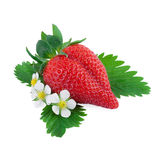 Fresh Strawberry with Leaf and Flower Royalty Free Stock Photo