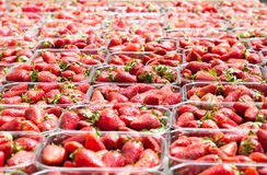 Fresh strawberry on the market in Jerusalem Stock Photo