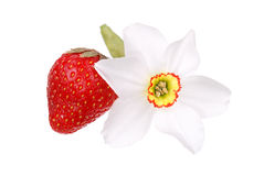 Fresh strawberry and narcissus flower Royalty Free Stock Photography
