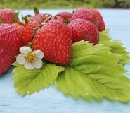 Fresh organic strawberry farming summer harvest on a blue wooden background. Fresh strawberry organic blue wooden background harvest summer farming royalty free stock photos
