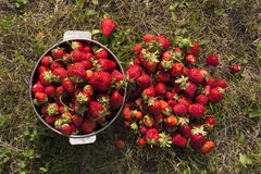 Fresh strawberry photo Royalty Free Stock Photo