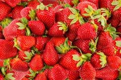 Fresh strawberry. Pile of juicy strawberries - background Royalty Free Stock Photo