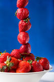 Fresh strawberry in plate on blue background Stock Images