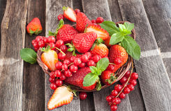 Fresh strawberry and redcurrant in a basket Stock Image