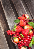 Fresh strawberry and redcurrant in a basket Stock Photography