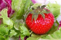 Fresh strawberry in salad Stock Photos