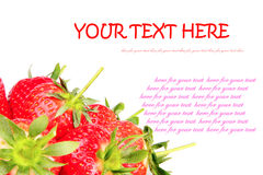 Fresh strawberry. Some fresh red strawberry  on the white background with sample text Royalty Free Stock Image