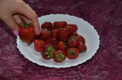 Fresh strawberry. Strawberries in a white plate on a purple background. a hand takes strawberries. Fresh strawberry. Strawberries in a white plate on a beautiful Royalty Free Stock Images