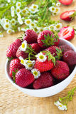 Fresh strawberry in the white bowl Royalty Free Stock Photos