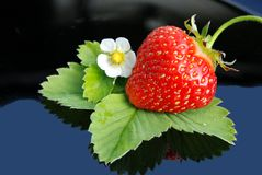 Fresh strawberry  and white flower Royalty Free Stock Photo