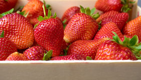Fresh strawberry in wooden box.  Royalty Free Stock Photo