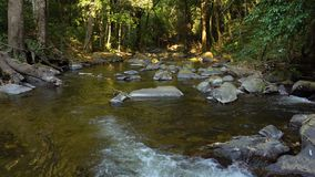 Fresh Stream in Lush Tropical Jungle Rain Forest. 4k UHD stock video footage
